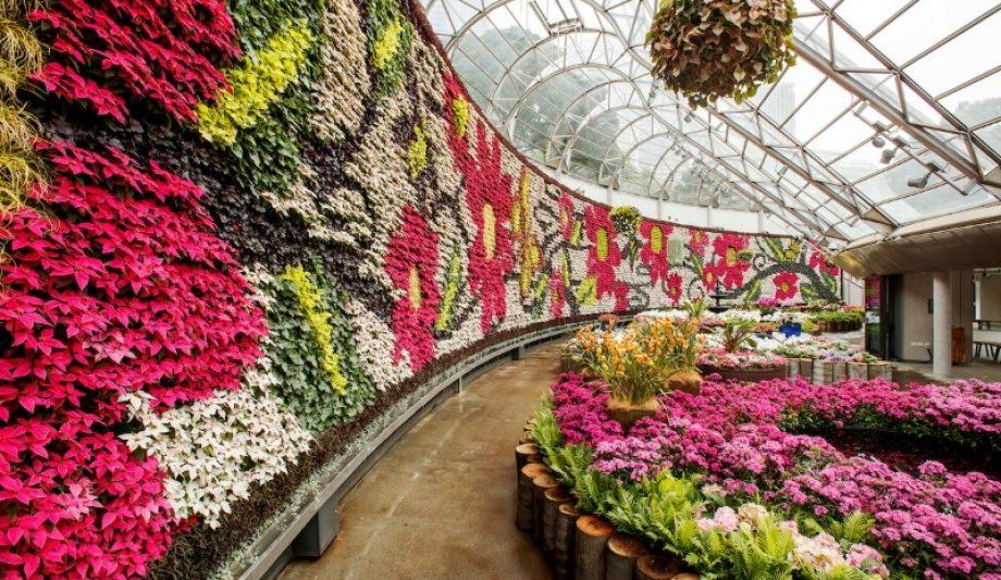 The Calyx Sydney Botanic Garden flower room