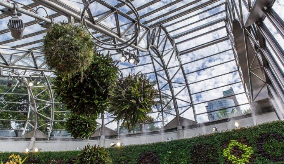 The Calyx Sydney Botanic Garden green wall